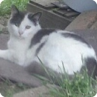 Adopt A Pet :: PETEY - Malvern, AR