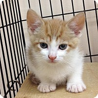 Adopt A Pet :: Maizey - East Brunswick, NJ