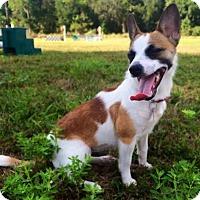 Adopt A Pet :: MAGGIE - Terra Ceia, FL