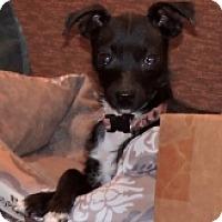 Adopt A Pet :: ROARY - Albany, NY