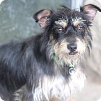 Adopt A Pet :: Fred - Woonsocket, RI