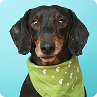 Adopt A Pet :: Mac - Toronto, ON