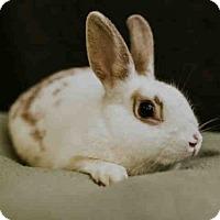 Adopt A Pet :: *JESSICA - Sugar Land, TX