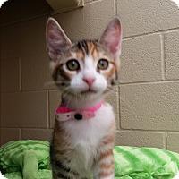 Adopt A Pet :: Gayla - Chula Vista, CA