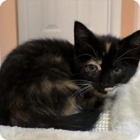Adopt A Pet :: Julia - Duluth, GA