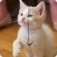 Adopt A Pet :: Demitre - Marietta, GA
