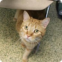 Adopt A Pet :: Chica Boo - Indianapolis, IN