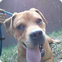 Adopt A Pet :: Dana - Ashville, OH