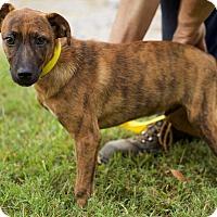 Adopt A Pet :: Jake - Harrisonburg, VA