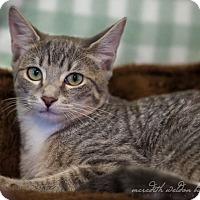 Adopt A Pet :: Hannah - Flower Mound, TX