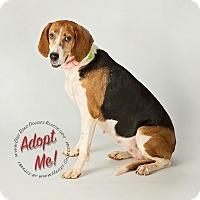 Adopt A Pet :: Sadie Mae - Gillsville, GA