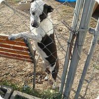 Adopt A Pet :: Marble - Jarrell, TX