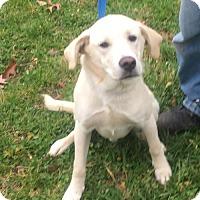 Adopt A Pet :: Oakley - Harrisville, WV