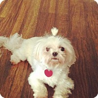 Adopt A Pet :: Gigi - San Angelo, TX