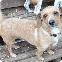 Adopt A Pet :: BABY GIRL - Anderson, SC