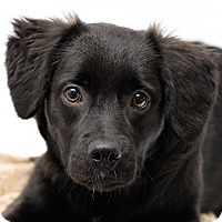 Adopt A Pet :: Emily - Westfield, NY