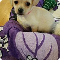 Adopt A Pet :: ! 4 Bailey - Colton, CA