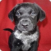 Adopt A Pet :: Romeo - Hadley, MI