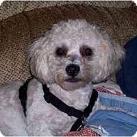 Adopt A Pet :: Freddy - Dayton, OH