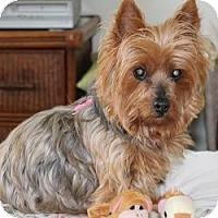 Adopt A Pet :: Daisy - St. Petersburg, FL
