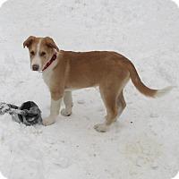 Adopt A Pet :: Rudy - Adopted! - Ascutney, VT