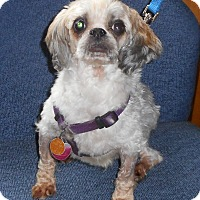 Adopt A Pet :: Brandi - Oberlin, OH