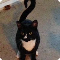 Adopt A Pet :: Fiji (IL) - Orlando, FL