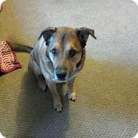 Adopt A Pet :: Mater - Sherman, CT
