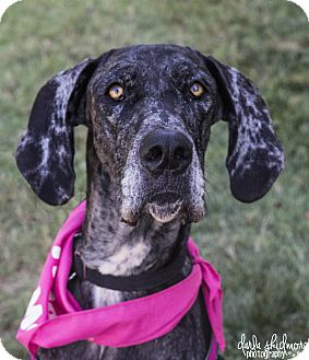 Adopt A Dog Mooresville Nc