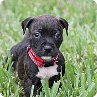 Adopt A Pet :: Baxter - Ft. Myers, FL