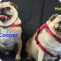 Adopt A Pet :: Molly & Cooper - Huntingdon Valley, PA