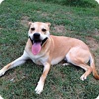 Adopt A Pet :: Mason - Barnegat, NJ