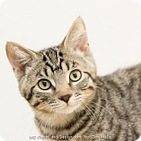 Adopt A Pet :: Zachariah - Fountain Hills, AZ