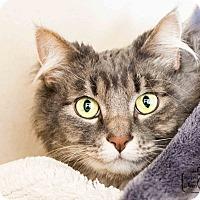 Adopt A Pet :: Clover - Divide, CO