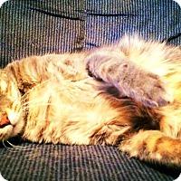 Adopt A Pet :: Ben - St. Louis, MO