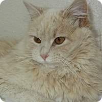 Adopt A Pet :: Cathy - Ridgway, CO