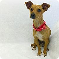 Adopt A Pet :: Walter - Mission Viejo, CA