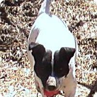 Adopt A Pet :: Molly Mae - Brattleboro, VT