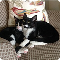 Adopt A Pet :: Kerrera - Monrovia, CA