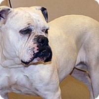 Adopt A Pet :: Madeline - Wildomar, CA