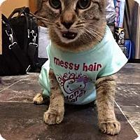 Adopt A Pet :: Maizy - Putnam, CT
