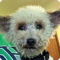 Adopt A Pet :: Burt - St Louis, MO