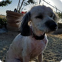 Adopt A Pet :: Pretty Penny- ADOPTED 1/14/17! - Apple Valley, CA
