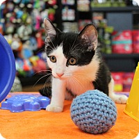 Adopt A Pet :: Frankie - North Haledon, NJ