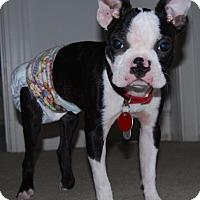 Adopt A Pet :: Turbo - Pollocksville, NC