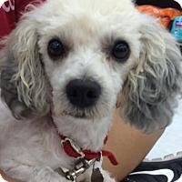 Adopt A Pet :: Elsa - San Pedro, CA