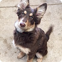 Adopt A Pet :: Hazel - Troy, MO