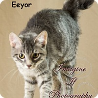 Adopt A Pet :: Eeyor - Oklahoma City, OK