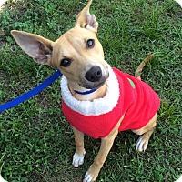 Adopt A Pet :: LUCY - Fort Pierce, FL