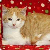 Adopt A Pet :: Tricky - Mt. Prospect, IL
